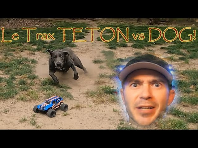 LaTrax TETON 1/18th Scale RC vs DOG
